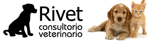 Veterinarios Rivet